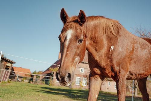 Warum husted mein Pferd?